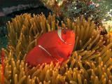 20041122 Dive0915 003.JPG