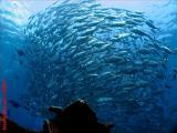 20041122 Dive0915 029.JPG