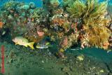20041123 Dive2 137 hh.JPG