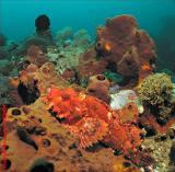 20041125 Dive 2 167 Bali - Nusa Penida hh.JPG