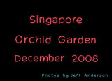 Singapore Orchid Garden (December 2008)