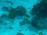 Fish swimming by in Shark-Sting Ray Alley.