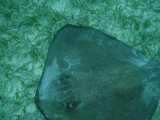 One of the places that we snorkeled was Shark-Sting Ray Alley.