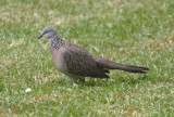 Permanent 'Feathered Residents' of our property