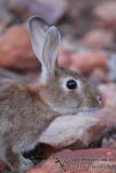 Rabbit and Hare