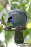 New Zealand Birds