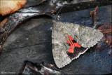 Rood Weeskind