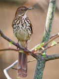 2009-10 Birding