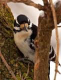 2008_birding