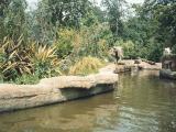 1991 shots of Windsor Safari Park