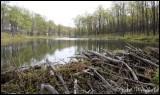 Beaver Dam, McKean County