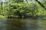 Fishing Kinzua Creek, McKean County