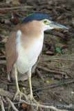 Heron, Nankeen Night @ Yellow Water
