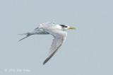 Tern, Swift @ Straits of Singapore
