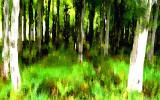 Mysterious Irish forest
