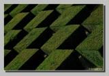 ::  Variations buissonnières  ::