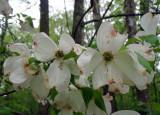 spring_ozark_rendezvous