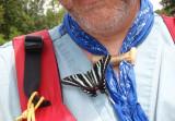 Freeloadin Butterfly.jpg