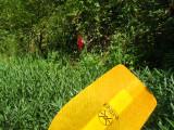 1st Cardinal Flower.jpg