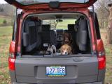 Dogs in Element 2.jpg