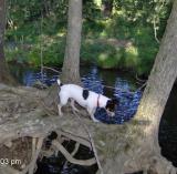 Tiny at Swimming Hole