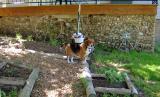Susie Ready to Hunt.JPG