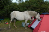 We really must get a bigger tent for the pony Dear!