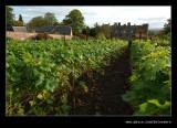 Croft Castle Walled Gardens #25