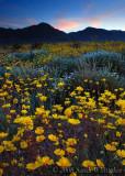 California's Desert is Blooming!