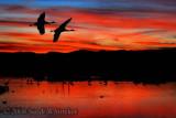 Bosque del Apache... It's for the Birds!!