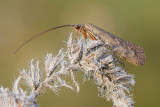 insects_without_flash