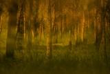 ben_shemen_forest