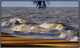 Wild and golden shore