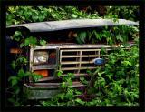 Jungle Ford Truck Close
