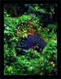 Jungle Tire