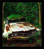 Jungle White Sedan