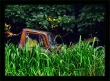 Truck In Elephant Grass