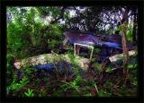 Jungle Station Wagon