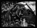 Jungle Hatchback BW