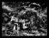 Jungle Paver BW