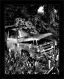 Jungle Intl Truck BW