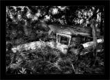 Jungle Station Wagon BW
