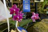 Best Phalaenopsis