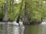 trussum_pond