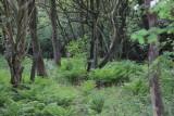Skovbunden