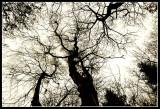 Træ-flokke kommer vrimlende hen over Diger trimlende det knyger ud af Himlene.jpg