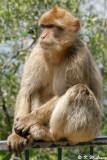 Monkey (DSC_4886)