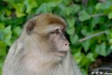 Monkey (DSC_4867)