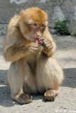 Monkey (DSC_4875)