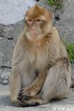 Monkey (DSC_4878)